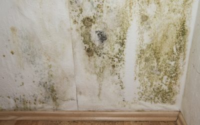 Council rejects radical plan to solve damp homes crisis because it's 'too expensive'
