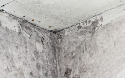 Damp mould can seriously damage your health